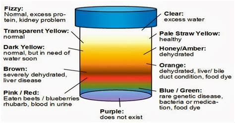 what does the color of urine what the color of your urine tells about your health