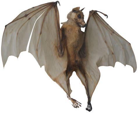 bat png transparent images  transparent png