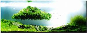 """Aquascape of the Month August 2010: """"Beyond the Nature"""