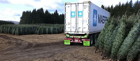 container christmass tree lancaster pa tree containers tree farm