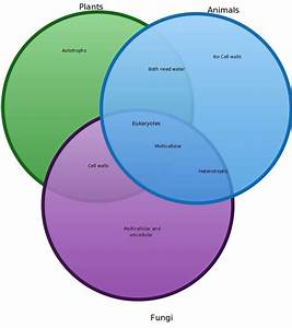 Plant Vs Animal Cell Venn Diagram Beautiful 43 Best Images