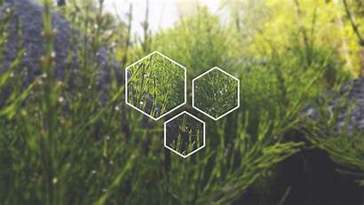 Plants Polyscape Desktop Nature Plant Wallpapers Computer