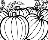 Pumpkin Pumpkins Coloring Pages Sheet Thanksgiving Printable Patch Halloween Celebrate Drawing Adults Fall Colors Seed Getdrawings Clipartmag Neo Popular Mouse sketch template