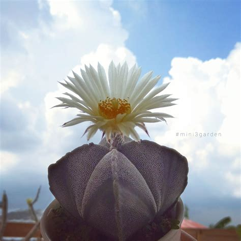 J U S T . T H E . W A Y . Y O U . A R E #astrophytum # ...