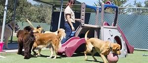 Asilo o dog sitter i consigli per scegliere for Babysitter dog sitter