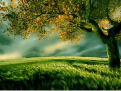 Beautiful Digital Scen...Beautiful Nature Scenery Wallpapers