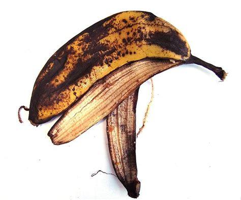 banana skin weight loss miracle superfood eating ibtimes
