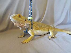 This Reptile Leash Is Perfect For Your Bearded Dragons And