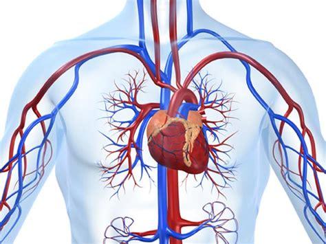 herz kreislauferkrankungen herz und blutkreislauf ein