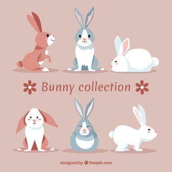 Rabbit Vectors, Photos and PSD files