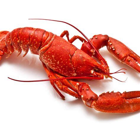 cuisine homard homard recettes de homard cuisine actuelle