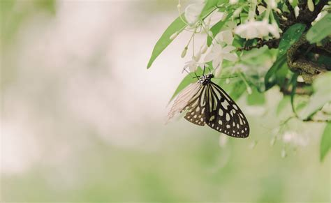 black  white butterfly  brown tree branch