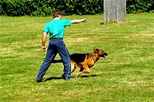 Advanced dog obedience who can quality for advanced dog for Dog training classes las vegas nv