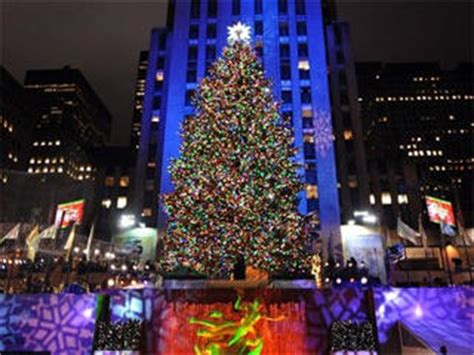 28 best what to feed a live christmas tree eat to live
