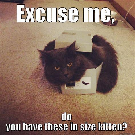 Black Box Meme - cat stuck in box memes