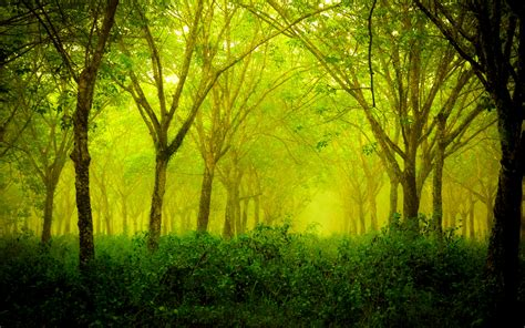 Green Forest Wallpaper Hd Wallpapersafari
