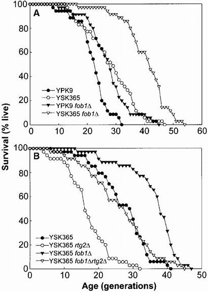 Ypd Span Plates Strains Grown Mean Analysis