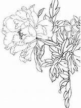Coloring Peony Flower Flowers Printable Recommended Mycoloring sketch template