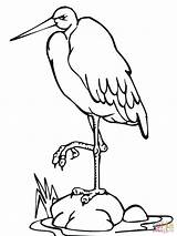 Stork Coloring Pages Leg Standing Drawing Printable sketch template