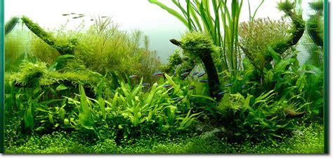 underwater gardens exhibit  conservatory  flowers
