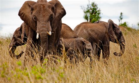 Coalition to End Wildlife Trafficking Online Pages WWF
