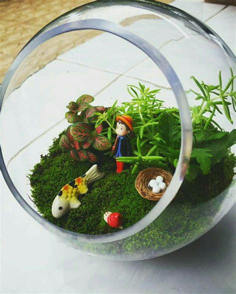 Terrarium,สวนในโหลแก้ว   สวนจิ๋ว