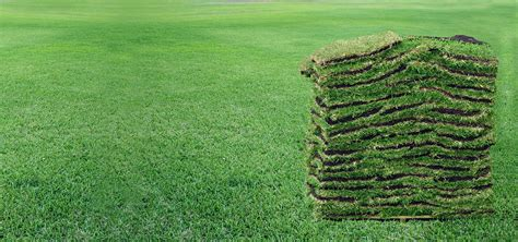 what type of grass is sod orlando st cloud sod supplier landscape supply co