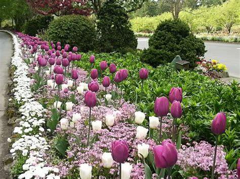 bulb garden layout bulb garden bulb garden layout garden buy wildflower bulb garden super bag at michigan bulb