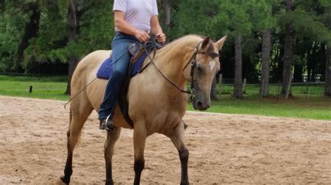Pin Buckskin-quarter-horses-for-sale-in-ohio on Pinterest