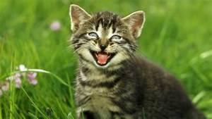 Katzen Fernhalten Von Möbeln : katzen die sprache der katzen katzen haustiere ~ Michelbontemps.com Haus und Dekorationen