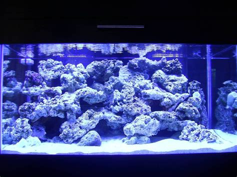 Top Reef Tank Aquascapes Drone Fest