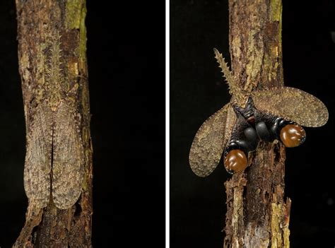 Photos Masters Of Disguise—amazing Insect Camouflage