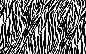 Zebra HD Desktop Wallpapers 17872