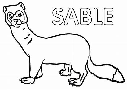 Sable Coloring