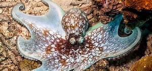 Starting, An, Octopus, Home, Aquarium