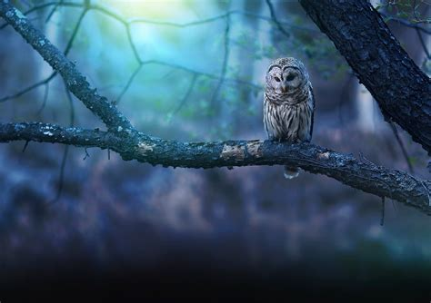 Background Digital Owl Wallpaper by Owl Nature Forest Hd Birds 4k Wallpapers Images
