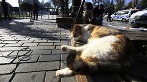 The laid-back cat who launched countless memes has been ...