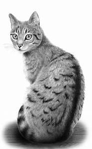 Die Besten 25 Katze Malen Ideen Auf Pinterest Katzen