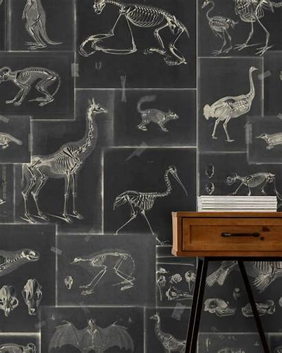 Zooarchaeology Gap Mind Clippings Animals