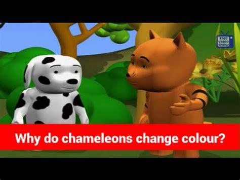do change color general knowledge for why do chameleons change