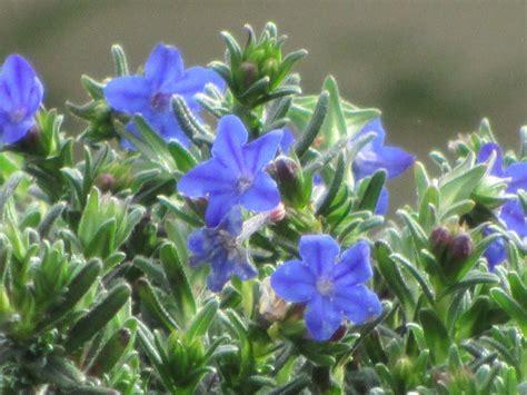 blue flowers names blue flowers names 22 wide wallpaper hdflowerwallpaper com