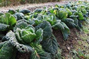 Gemüse Im Winter : gem se im winter das k nnen sie anbauen gartenblog von fr schl ~ Pilothousefishingboats.com Haus und Dekorationen