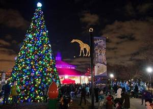 Brookfield Zoo Holiday Lights Brookfield Zoo In Chicago Has Over 1 Million Holiday Lights