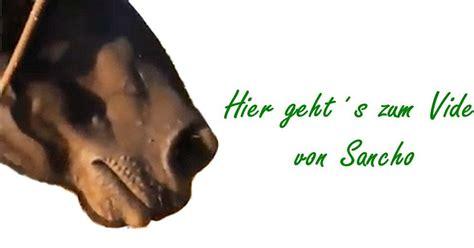 homoeopathie fuer tiere erfahrungsbericht pony sancho