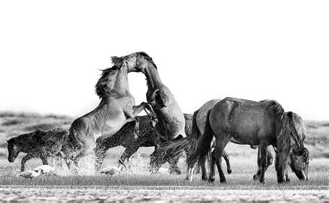 horses territorial horse