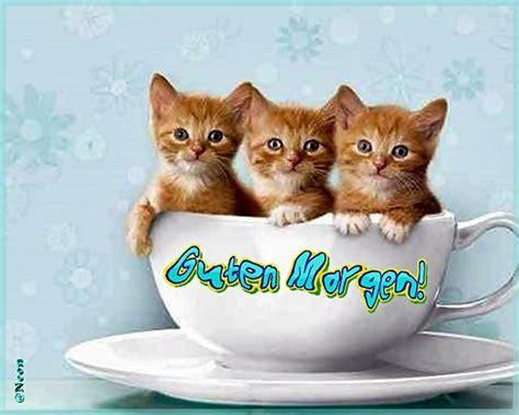 guten morgen katze inspirierende guten morgen bilder zum speichern und versenden guten morgen