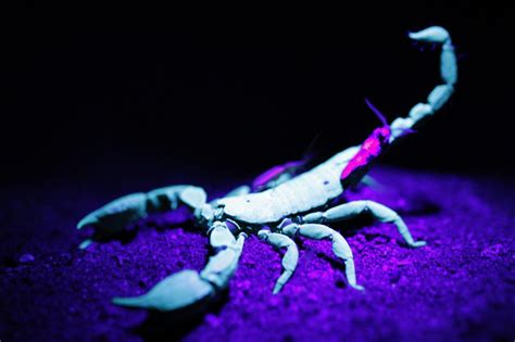 Scorpion Animal Wallpaper - scorpion wallpapers wallpaper cave