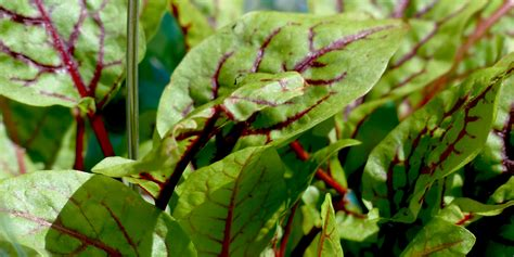 18 Interesting Plants You're Probably Not Growing (but