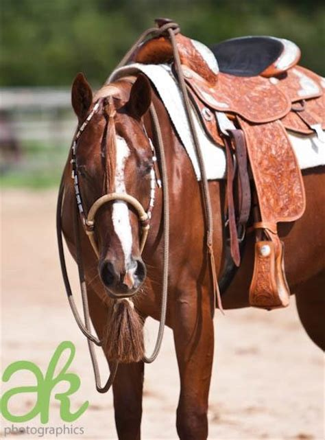 western horse quarter tack pleasure saddle horses appaloosa paint barrel racing ranch cutting cowgirl chestnut pole bronc american saddles rodeo
