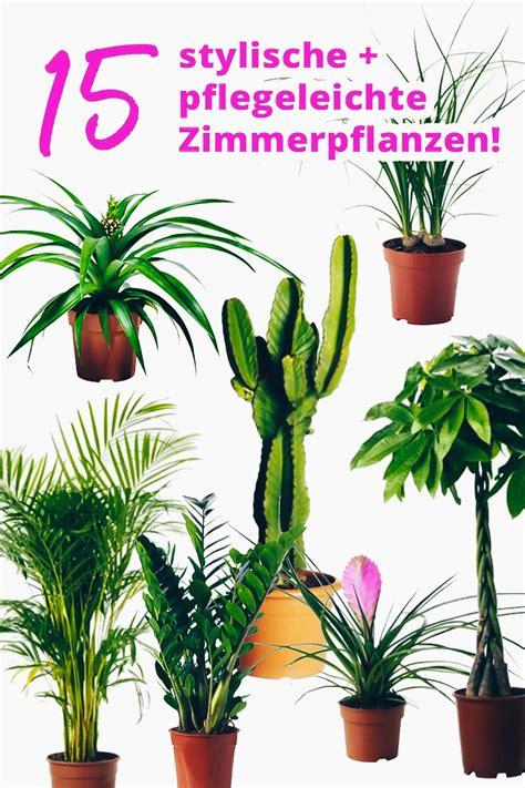 Große Pflanze Wohnzimmer by Der Pflanzen Guide 15 Stylische Und Pflegeleichte